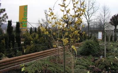 Alte Gärtnerweisheit – Winterpflanzung