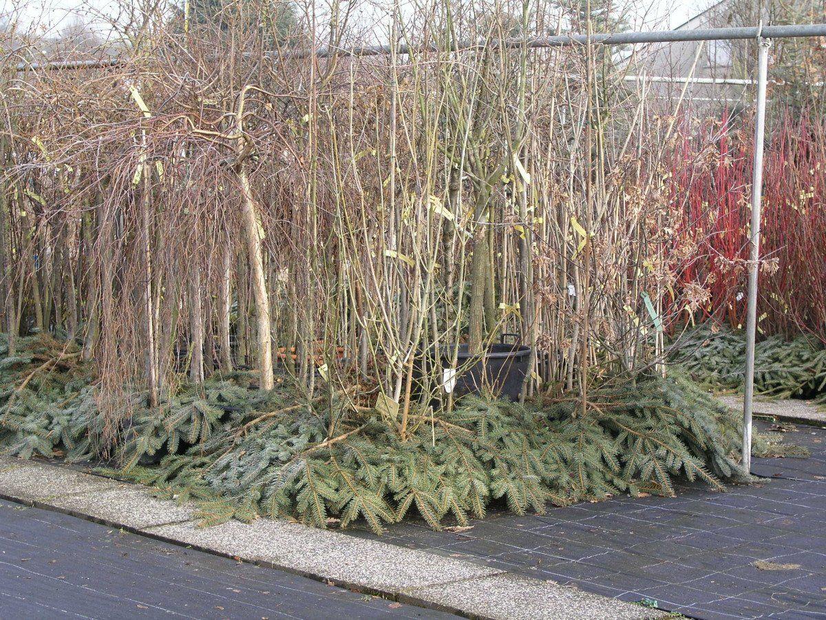 Pflanzzeiten archive baumschule rinn for Gartengestaltung 70er jahre