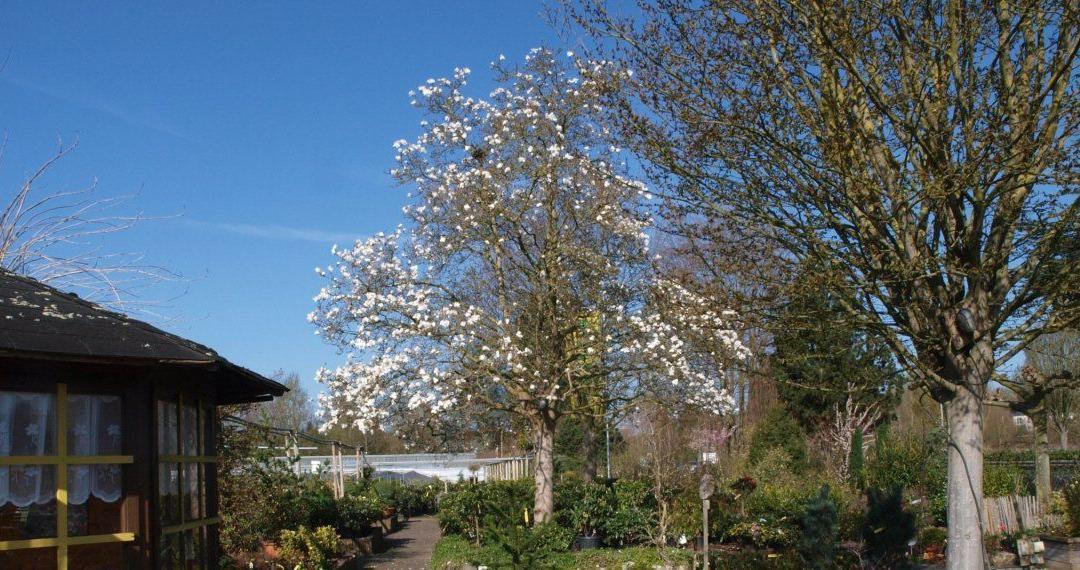 Frühlingsfest – Tag der offenen Gärtnerei