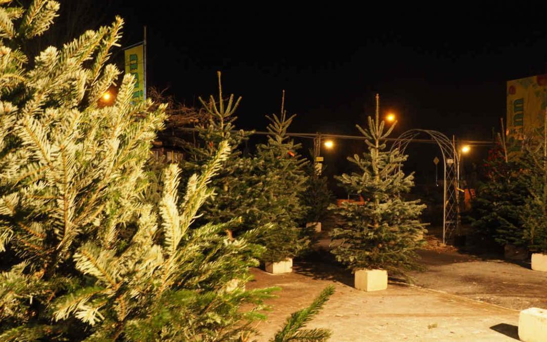 Weihnachtsbäume – individuell und vielfältig