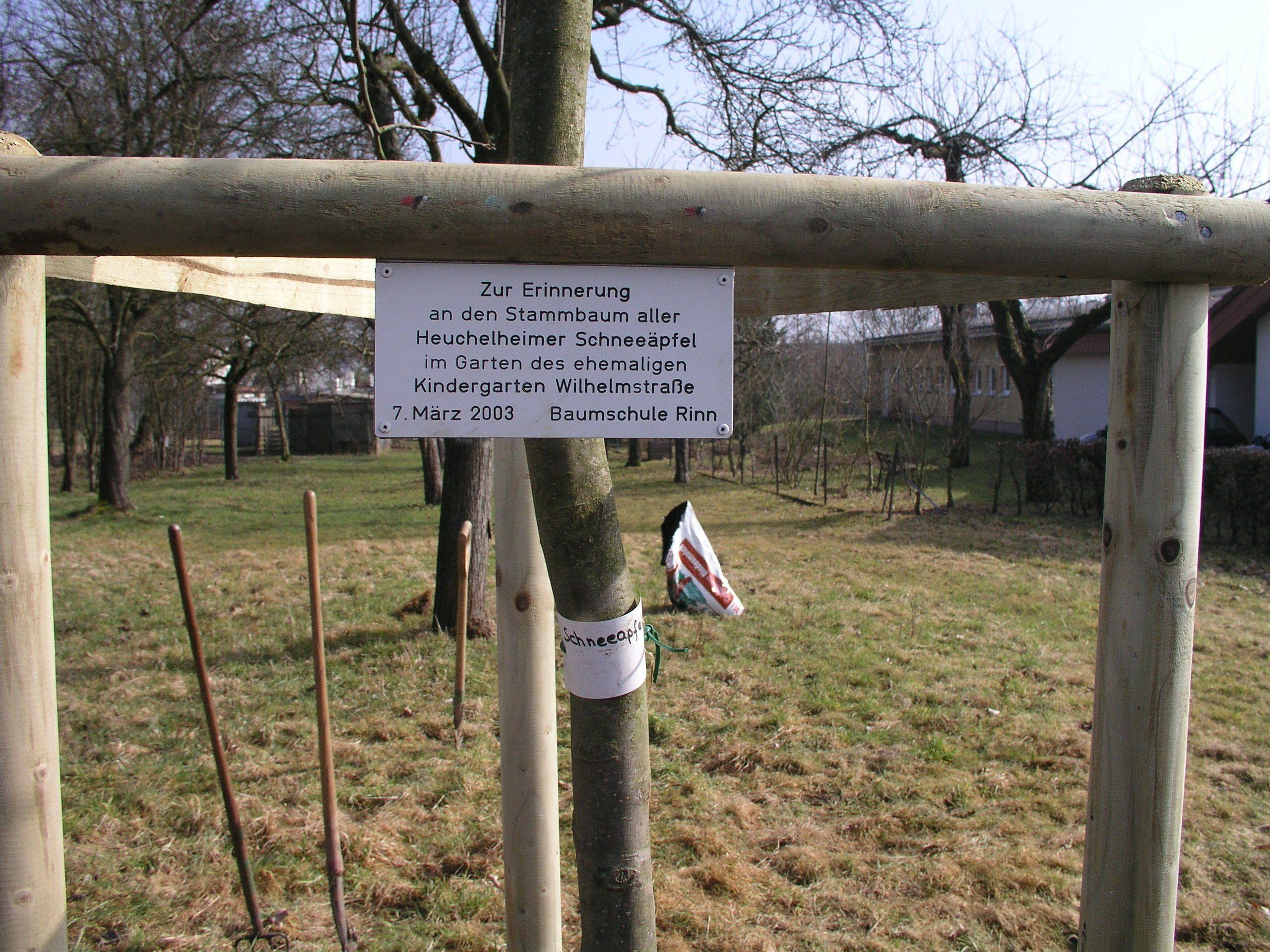 Zur Erinnerung an den Stammbaum aller Heuchelheimer Schneeäpfel im Garten des ehemaligen Kindergarten Wilhelmstraße Heuchelheim