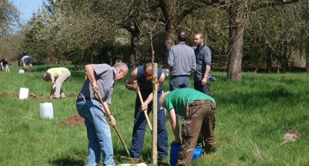 Pflanzung einesObstbaum-Hochstammes