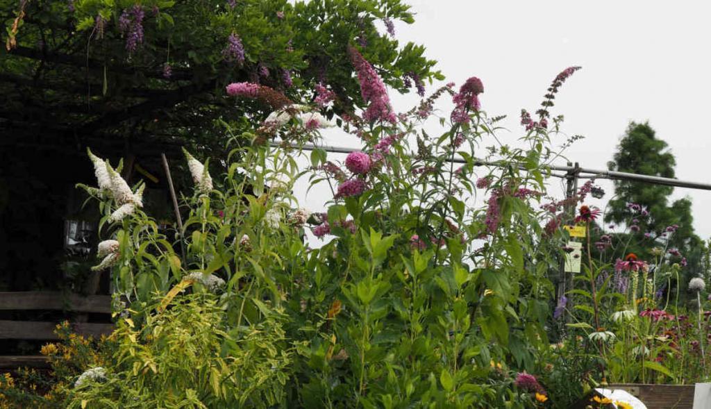 Bienenfreundliche Pflanzen und Stauden