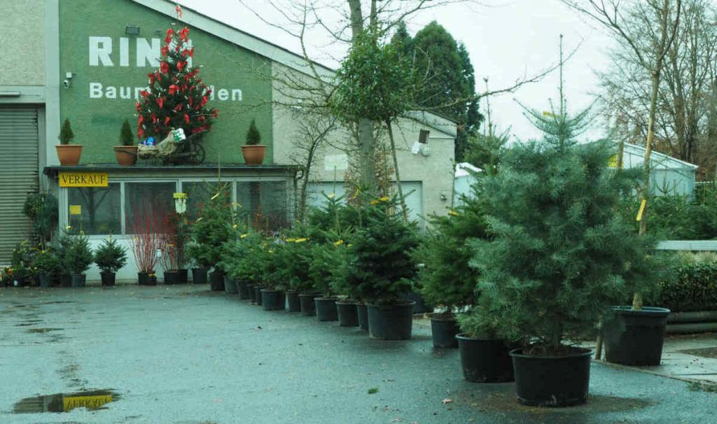 Weihnachtsbäume in unterschiedlichen Größen