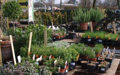 Küchenkräuter- und Erdbeerpflanzen sind da!