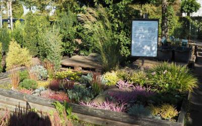 Heidepflanzen – Renaissance der Heidegärten