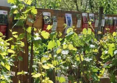 Rinn Beerenobst Wein 400x284 - Beeren & Wildobst