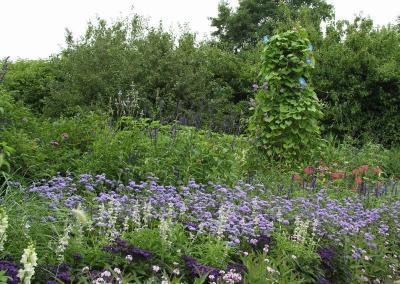Sommerblumen und Kletterpflanzen